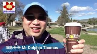 行為似鴨,但實質係雞?海豚哥哥 Mr Dolphin Thomas 享受與美洲白冠雞 Fulica americana 的時光