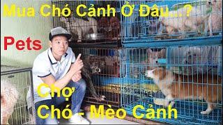 Chợ Chó Cảnh, Chợ Mèo Cảnh, Chợ Chó Mèo Cảnh Lớn Nhất Việt Nąm Tại Hà Nội, PHUONG NAM TV