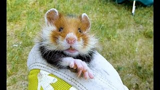 Coole Videos #367: Wilder Hamster || ✪ Stern DuTube