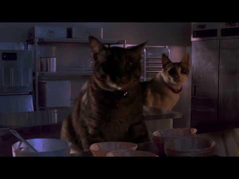 Jurassic Park Cat Raptor - อย่าปล่อยให้แมวหิว!