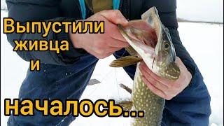 Поклевка за поклевкой Зимняя рыбалка Щука на жерлицы конец февраля