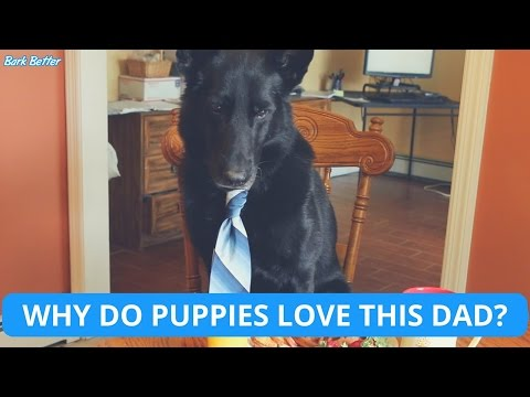 Why Do Puppies Love This Dad? | Cute Father's Day Dog Commercial by Bark Better (OFFICIAL 2016)