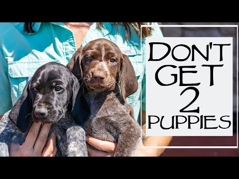 5 Reasons NOT To Get Littermates