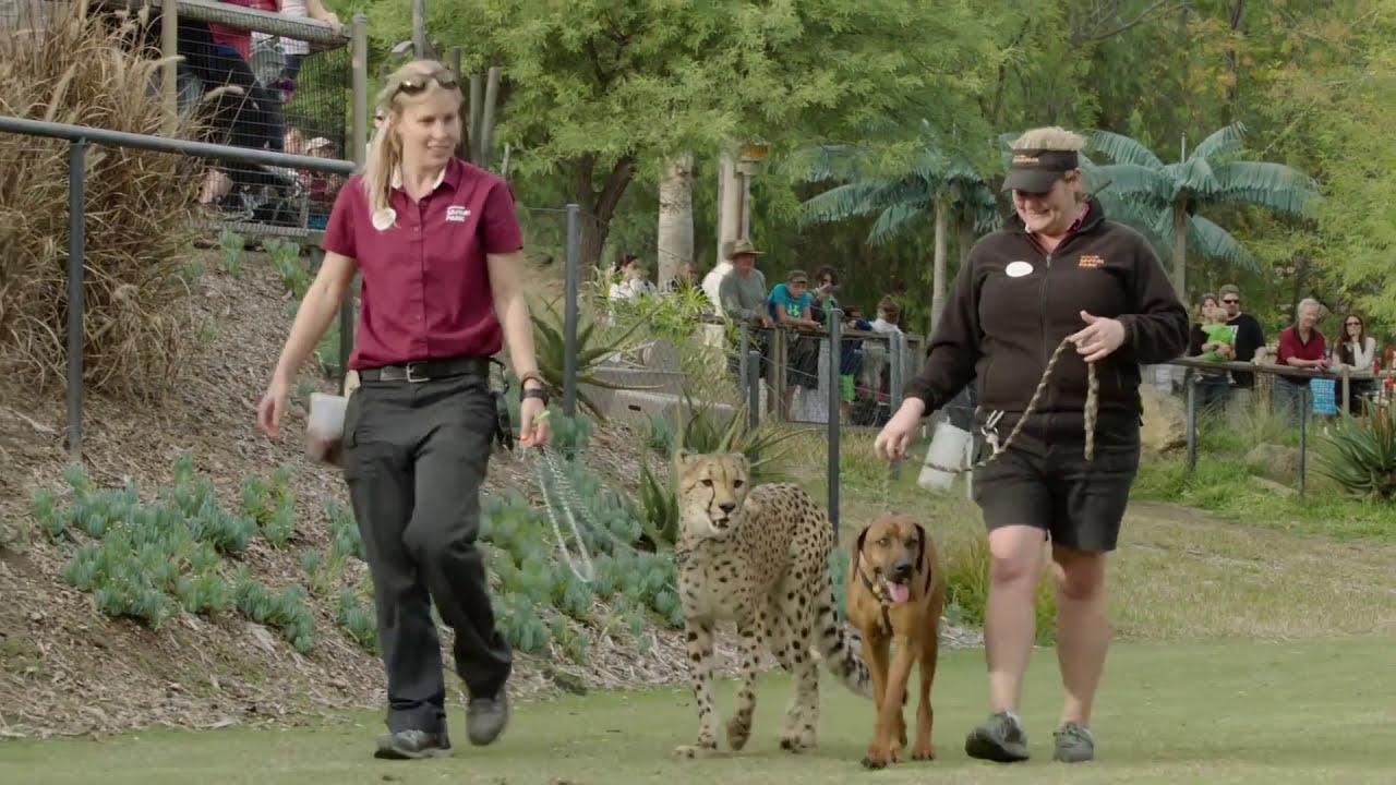 Cheetah & Puppy Playtime - Ruuxa, Raina & Rae Romp Around