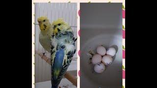 Yeni Üretim Sezonundaki Yumurtalarımız Gelmeye Başlıyor