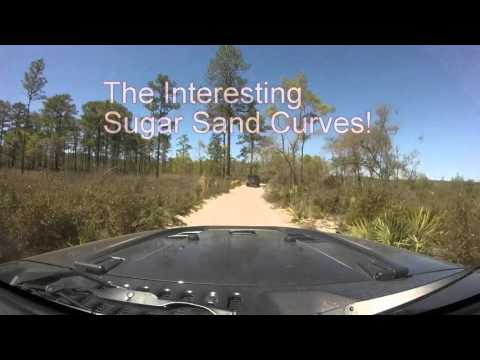 Ocala National Forest Jeep Ride
