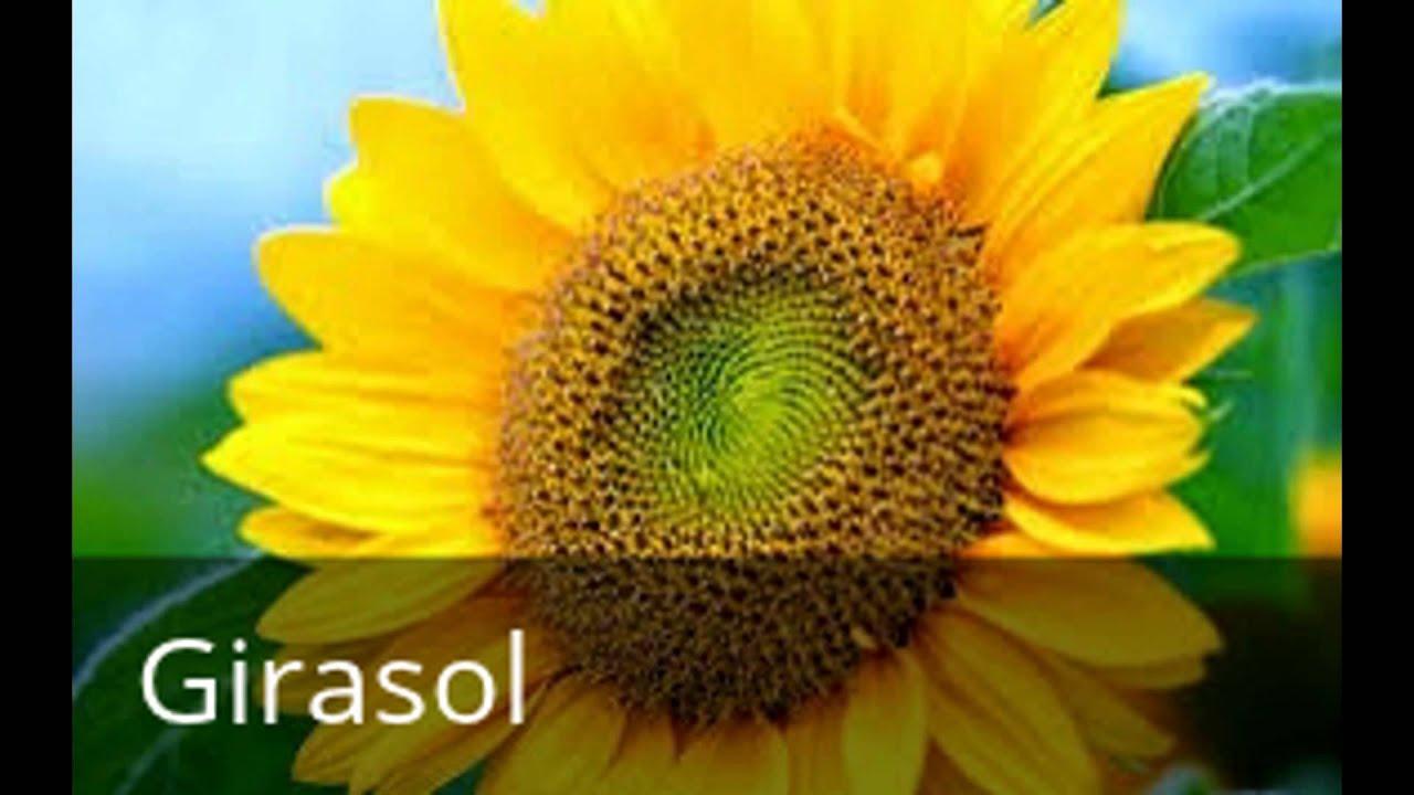 Flores mas comunes youtube for Plantas ornamentales mas comunes