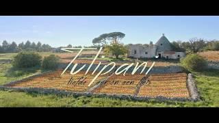 TULIPANI - Officiële NL trailer | 21 september in de bioscoop