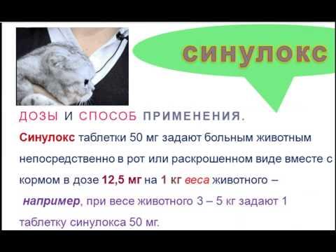 Синулокс при цистите для кошек