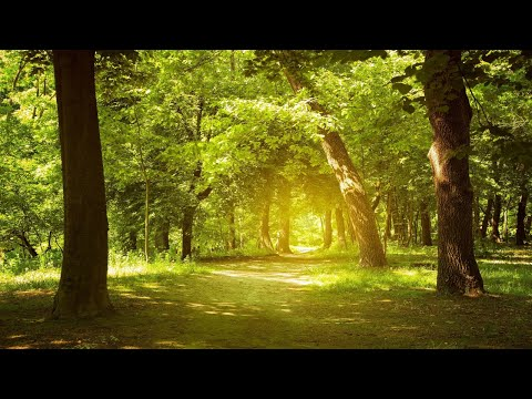 Relaxing Music, Enchanting Forest, Nature Sounds, Piano Music, Stress Relief