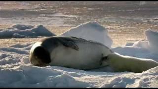Wild Russia - 2 - Arctic (Россия: От Края До Края - Арктика) - 1/3
