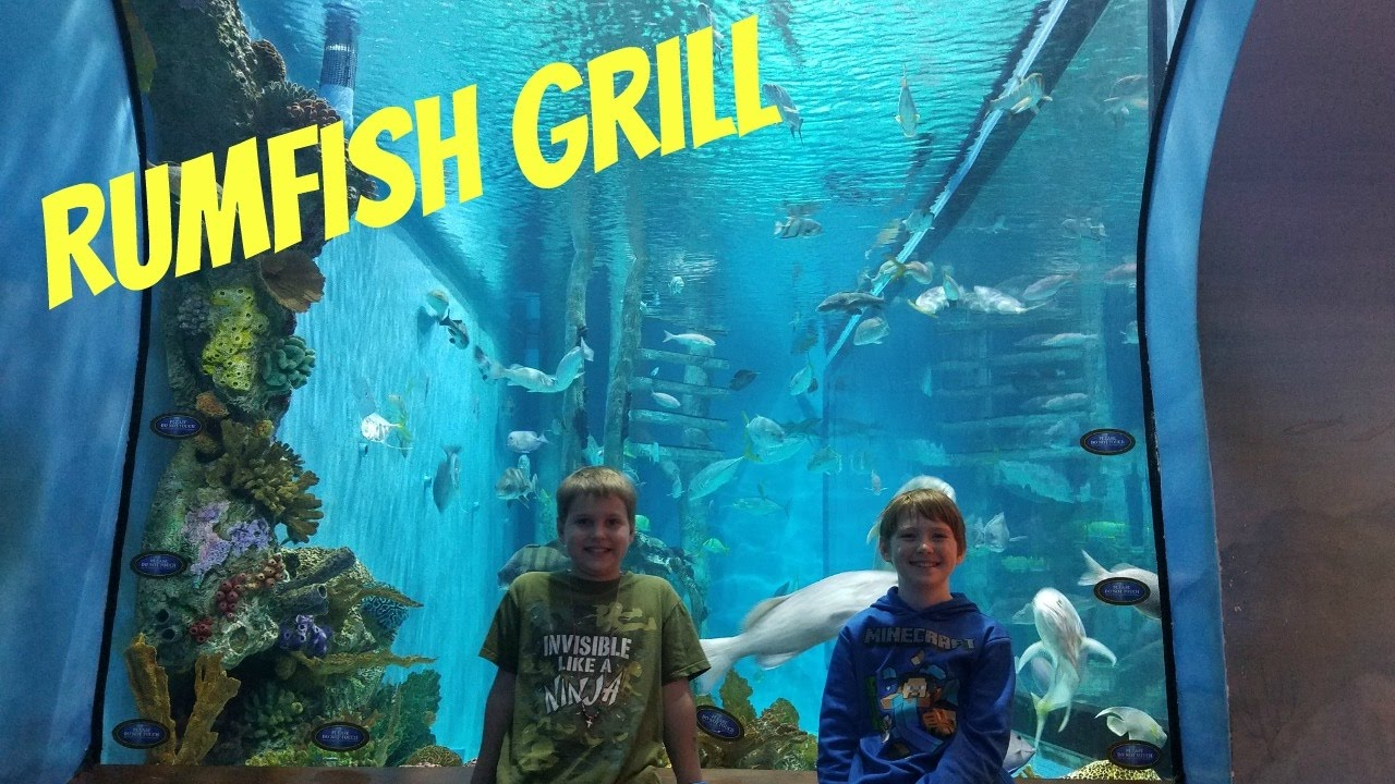 Rumfish Grill St Pete Beach Aquarium