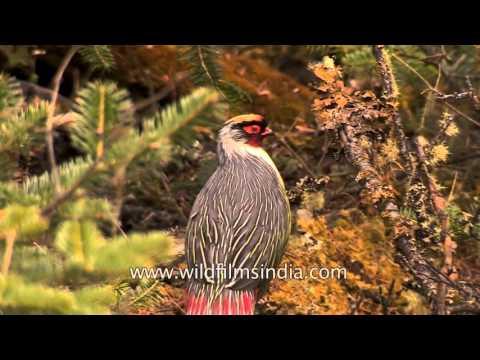 Most beautiful bird?