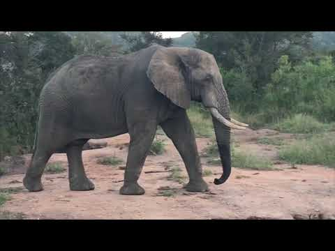 Gateway To Africa Safaris.  Photographic Trips Africa