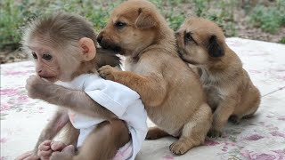 Monkey Puppy Baby || Cute puppies love to play with baby Monkey Sky