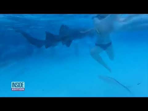 Нападения акул на людей.