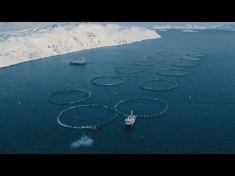 Russian Aquaculture Company