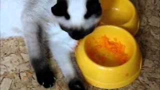 Кот лопает морковку.wmv