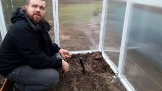 Czosnek w ogrodzie i szklarni