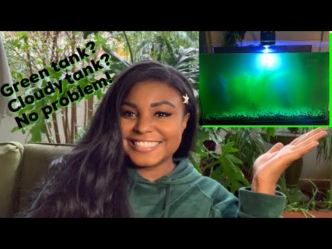 How I Got Rid Of Algae Bloom & Bacterial Bloom In My Freshwater Tank! Before & After!
