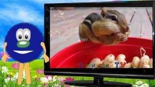 Алфавит Азбука Учим буквы азбука для малышей буква Б11