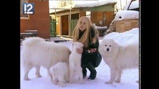Самоедские собаки