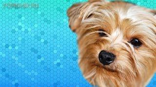 Признаки бешенства у собак | Симптомы | Что делать.