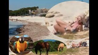 Mallorca Beach - Cala Millor - Sa Coma