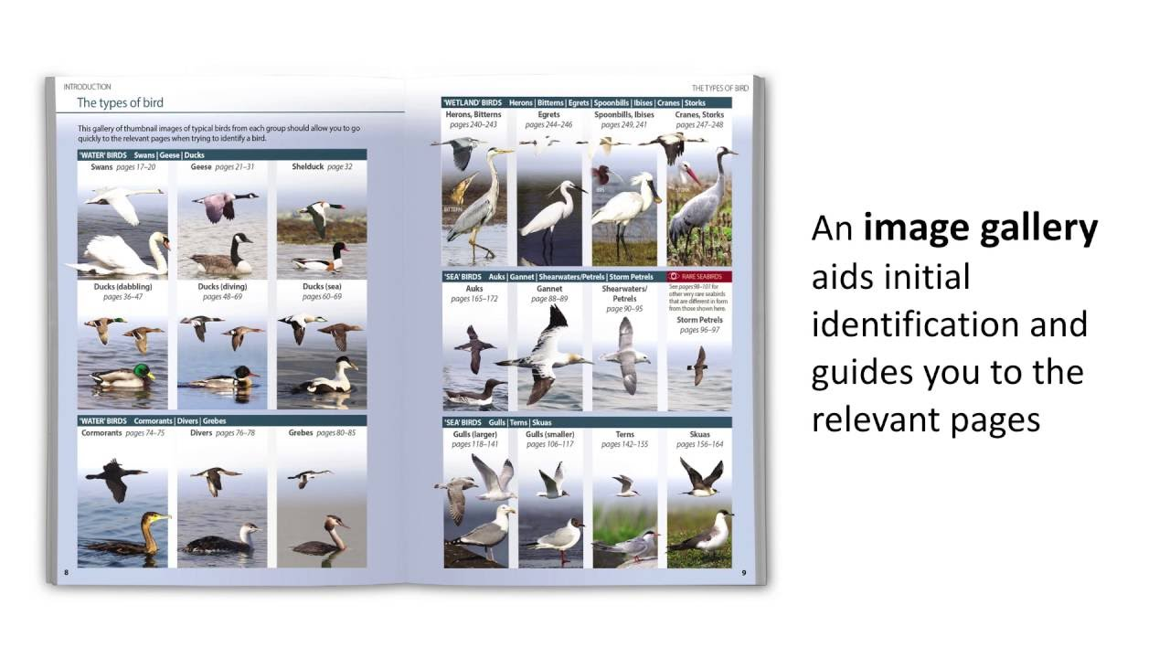 9780691158891 Britains Birds An Identification Guide To The Of Britain And Ireland