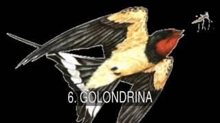Los mejores mitos, leyendas y simbolog a de las aves