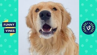 Funny Golden Retriever Compilation