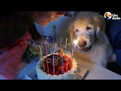 Dog Celebrates 15th Birthday | The Dodo