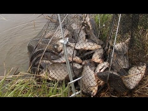Рыбалка на реке  Чулым