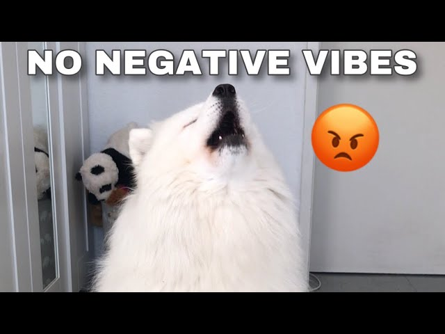 Extremely Motivational Speech By Dog