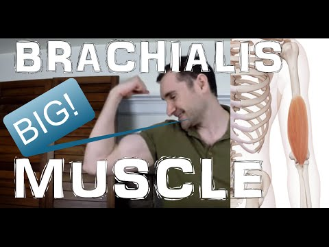 Brachialis: The Forgotten Arm Muscle