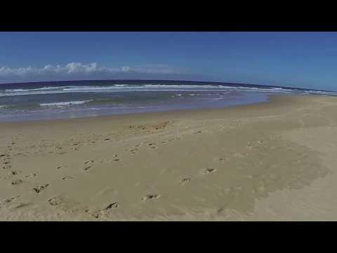 Bokarina Beach, Bokarina (QLD) - dogexplorer.com.au