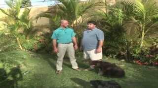 Vídeo Completo Sobre O Padrão Racial Da Raça Labrador Retriever