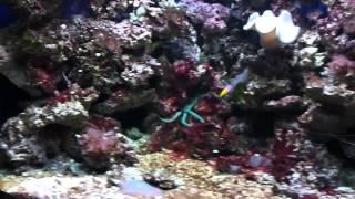 Oceanarium Nyiregyhaza