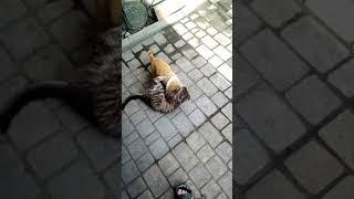 Вольная борьба .Кот против собаки
