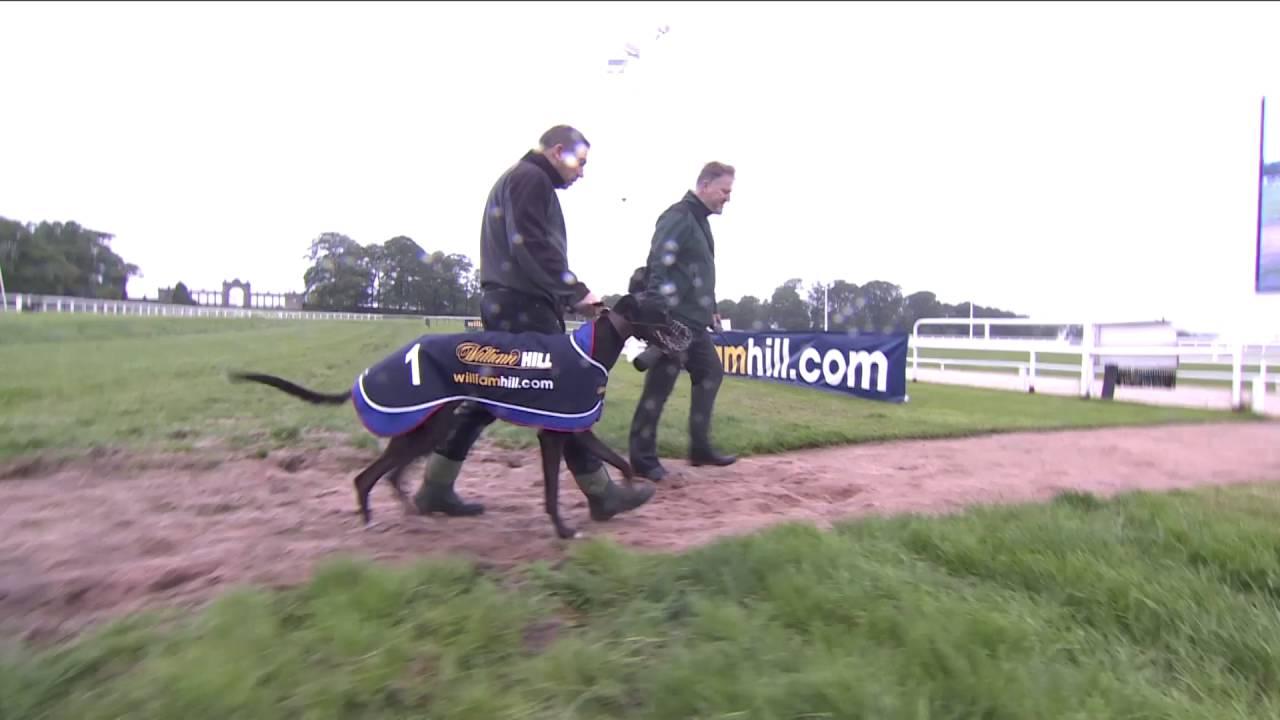 Greyhound Vs Horse