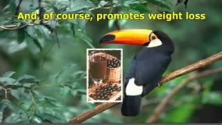 Acai Berry Weight Loss Supplement.