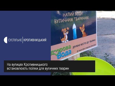 Суспільне Кропивницький: На вулицях Кропивницького встановлюють поїлки для вуличних тварин