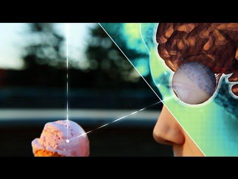 MINT erklärt die Welt: Mathematik, Informatik, Naturwissenschaften, Technik