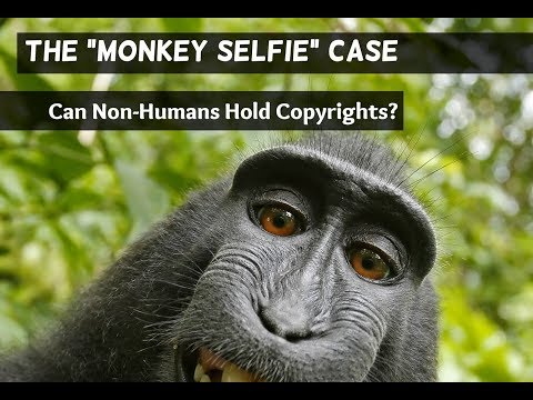 "The ""Monkey Selfie"" Case: Can Non-Humans Hold Copyrights?"