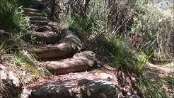 Piles Creek Loop Walk - Brisbane Water National Park