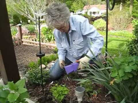 Plants That Divide And Conquer   Wisconsin Garden 19.wmv
