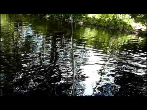 Fly Fishing 2010 - Trout And Grayling Fishing On The River Nidd
