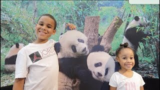 FamousTubeKIDS Go To The Zoo And See Giant Panda Bears
