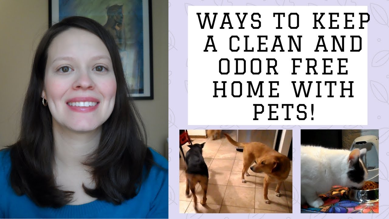 How To Keep A Clean And Odor Free Home With Pets How To