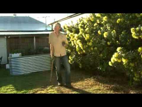 The Garden Gurus - What to Do in Queensland